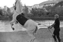 Fiesta de Cavallo