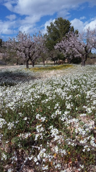 A meadow of white flowers